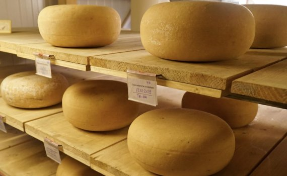 Cheese ripening (maturation or affinage) | GOOD TO KNOW
